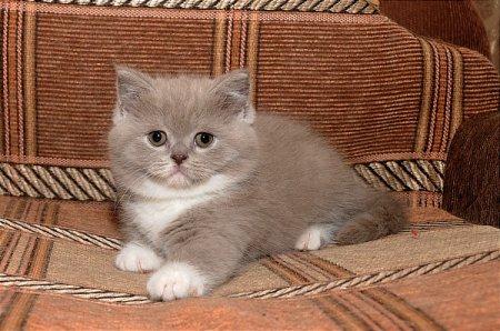 У Лаки родился очаровательный котенок...